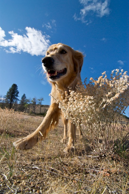 Miss Bella Dog
