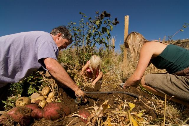 Grandpa, Eva and Rachelle Harvest Potatoes